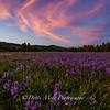 Sagehen Meadows Pink Vortex
