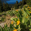 Mules Ears, Lake Tahoe from the TRT
