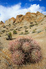 Barrel Cactus, Alabama Hills