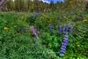 Floral Rainbow, Mt. Rose Wilderness, Nevada