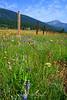 Wildflower Panorama along Hwy 8