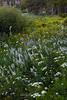 Mt. Rose Widlerness Wildflower Meadow