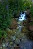 Enchanted Stream, Mt. Rose Wilderness