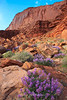 Moab, Sunlit Flowers