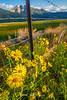 Washoe Valley Morning Sunshine