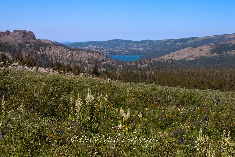 Carson Pass Caples Lake, CA