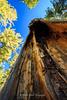 Dead Tree Stump