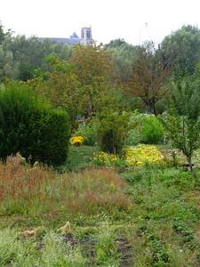 Bourges Les Marais 028 C-Mouton