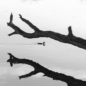 _VV_1490-©Ch-Mouton