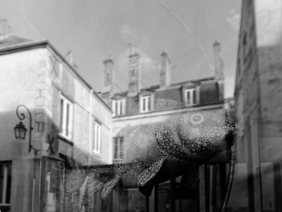 L1010775-©Ch-Mouton