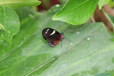 Serre papillon 010407 2 C-Mouton