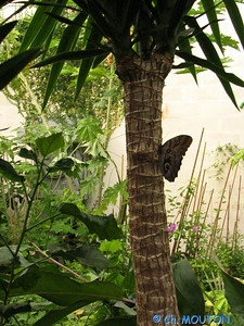 Parc floral Papillon 03 C-Mouton