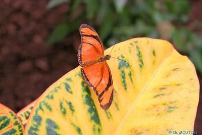 Serre papillon 010407 6 C-Mouton