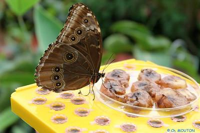 Serre papillon 010407 8 C-Mouton