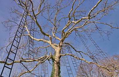 Tadashi Kawamata : Dans ses oeuvres crées en 2011 à Chaumont-sur-Loire, l'artiste japonais Tadashi Kawamata joue avec les rapports d'échelles et offre aux visiteurs l'expérience d'une immersion totale dans la nature et une nouvelle lecture du paysage