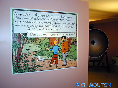Tintin 19 C-Mouton