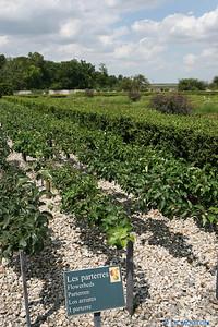 Jardins de Talcy 2 C-Mouton