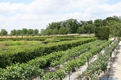 Jardins de Talcy 4 C-Mouton