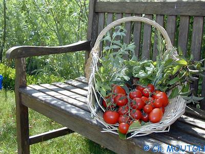 Tomates 0 C-Mouton