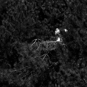 _MG_6369_©Ch  Mouton