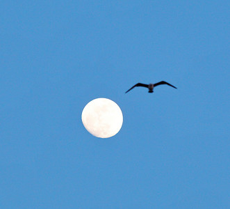 lune, mouettes