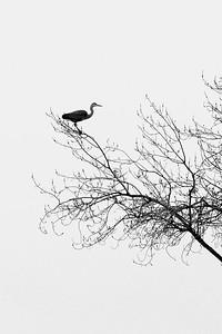 _VV_7361-©Ch-Mouton-VERTI