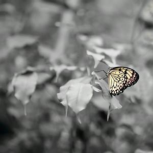 _MG_9533 -DxO-300dpi-©Ch  Mouton