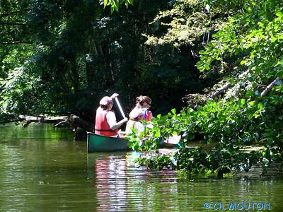 Canoe 016 C-Mouton