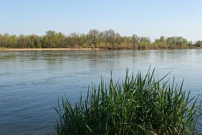 Loire 090407 12 C-Mouton