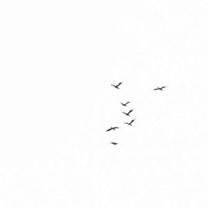 _MG_3055_DxO_©Ch  Mouton