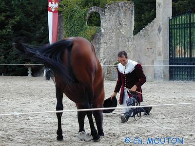 Chambord Spectacle équestre 18 C-Mouton