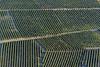 vignes, sancerrois, pieds de vign, vignobles