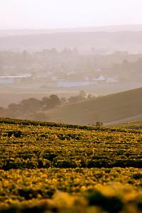 vignes, vignobles, sancerrois