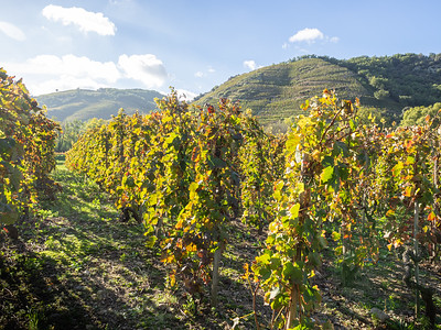 Le vignoble de Châteaubourg (Côte du Rhône)