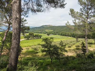 Paysage de vignes, conifères et chênes truffiers