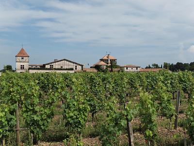 Les vignes du Château Smith Haut Lafitte
