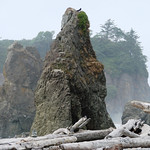 "Ruby Beach, near Kalaloch, WA - Ruby beach is a favorite beach of mine. There are several large rock formations and sea stacks here. This fifty foot one has special significance to me. I climbed it twice in my life. First in my twenties, with much bravado, drunk. Again in my thirties, with much fear, sober. Now in my fifties, I prefer to stand at the bottom and brag about climbing it ""back in the day"". (Note the several cairns placed on the log)"