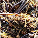 Rialto Beach, WA - Our last day, we headed North and stopped at Redondo Beach. We found this pile of sea whips there.