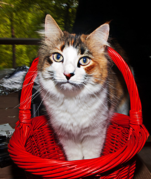 Have Basket, Will Travel.