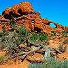 Driftwood <br> Arches National Park