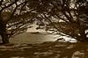 Coastal Trees