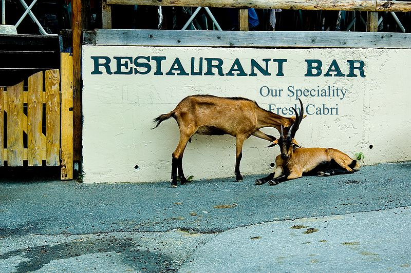 Illiterate Goats<br /> Third Place, <br /> Shades Valley Camera Club, <br /> August 2005