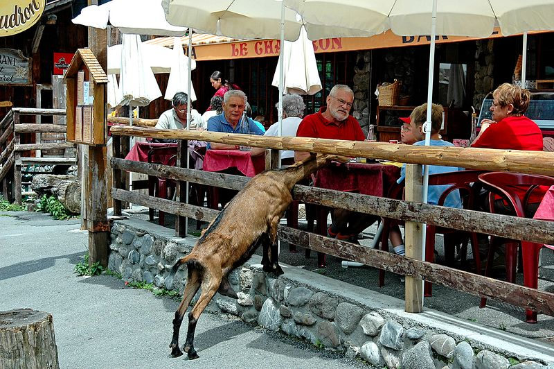 Hungry Goat <br> Les Lindrates, France