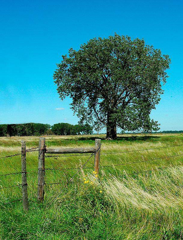 Gate & Tree