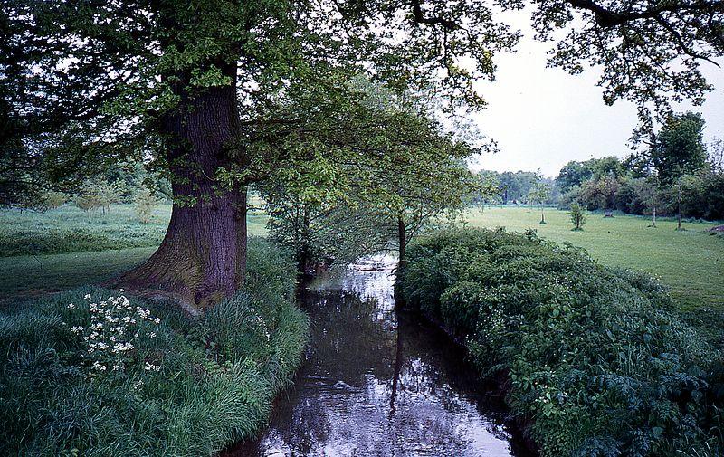 Tree & Stream