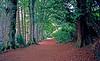 Leafy Lane,<br /> Pitlochery