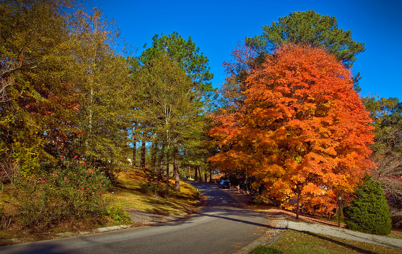 Autumn on Wellington Road.<br /> Homewood, Alabama