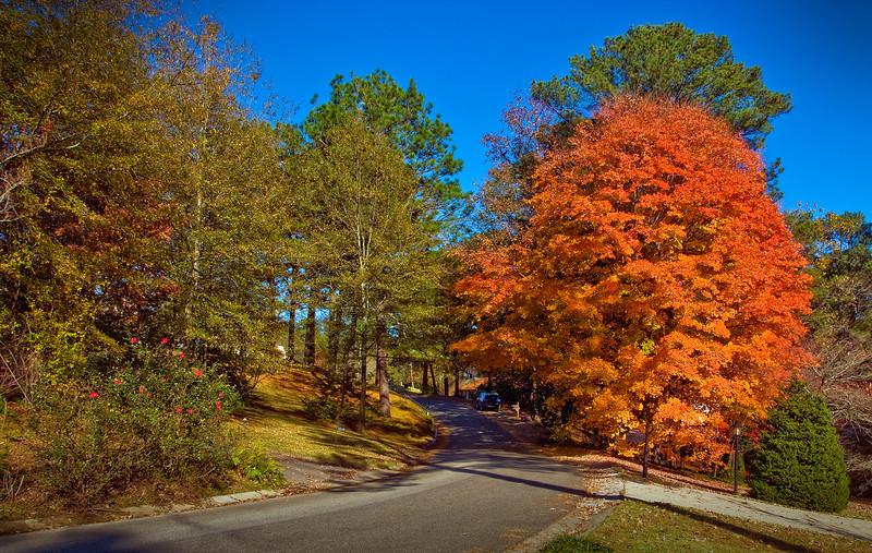 Autumn on Wellington Road.<br /> Homewood, Alabama