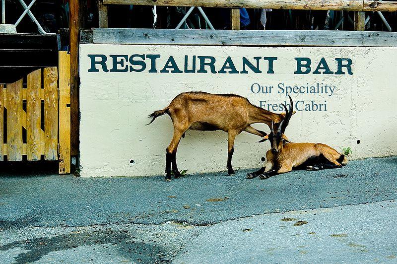 Illiterate Goats