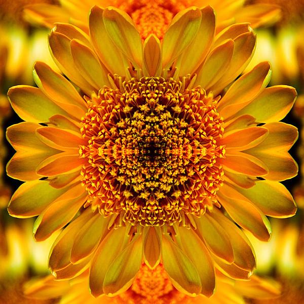 Symmetric Sunflower